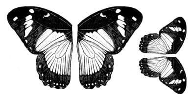 Butterfly Wings Crafty Individuals Retired Stamp (CI-126)