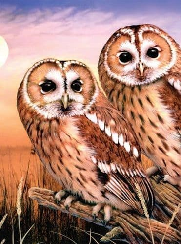 Paint By Numbers -  Tawny Owls