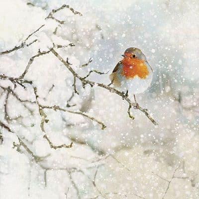 Bug Art Robin Red Breast Christmas Card